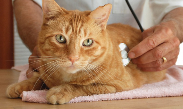 Pet Emergency Clinic - Pacific Palisades, CA